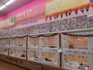 ショップ コーナン ペット 大阪のアクアショップ・熱帯魚店の一覧|AQUA MART